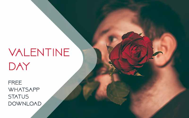 Valentine Day Whatsapp Status Video Download Valentines
